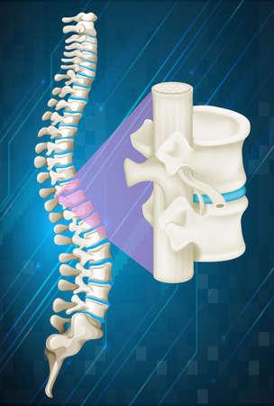 Spine bone on blue background illustration