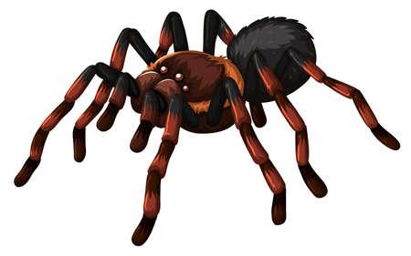crawling animal: Wild spider on white background illustration