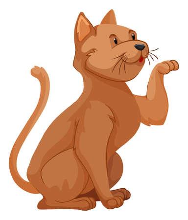 brown hair: Short hair cat with brown hair illustration