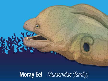 eel: Moray eel swimming in the sea illustration