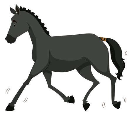 gallop: Black horse running alone illustration Illustration