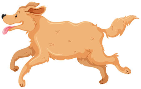 golden retriever puppy: Dog with brown fur running illustration Illustration