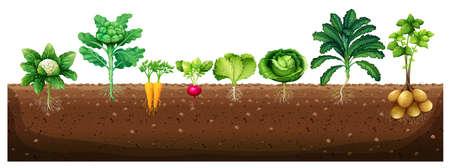 Warzywa rosnące z podziemnym ilustracji Ilustracje wektorowe