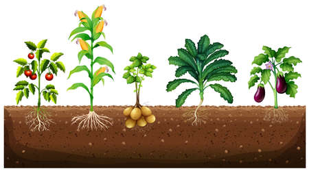plants growing: Different kinds of plants growing in the garden illustration