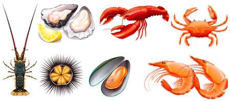 fresh seafood: Set of fresh seafood illustration Illustration