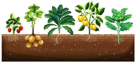 Many kinds of vegetables planting on ground illustration