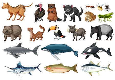carnivorous fish: Set of different types of wild animals illustration