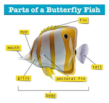 labelled: Diagram of different parts of fish illustration