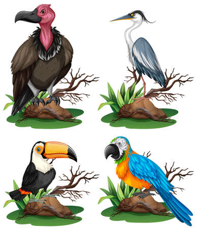 Four different kinds of wild birds illustration