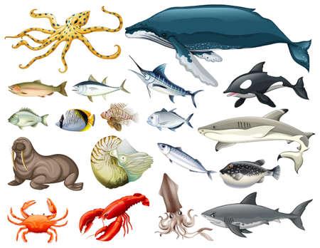 さまざまな種類の海の動物のイラストのセット