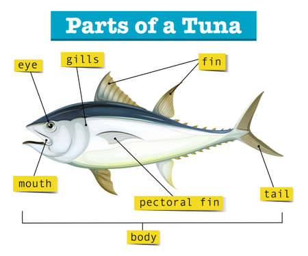 labelled: Diagram showing different parts of tuna illustration