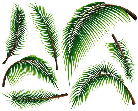 frond: Different sizes of palm leaves illustration