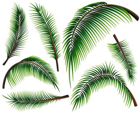 Verschillende maten van palmbladeren illustratie Stock Illustratie