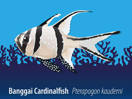 carnivorous fish: Banggai cardinalfish swimming in the sea illustration Illustration