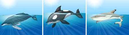 'killer whale': Whale and shark in the ocean illustration