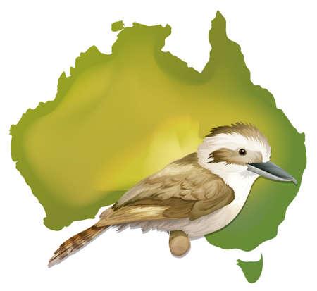 oz: Wild bird in Australia illustration Illustration