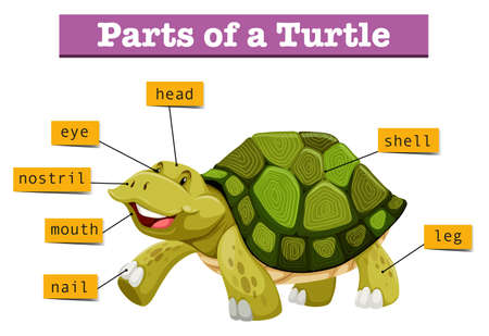 nostril: Different parts of turtle illustration
