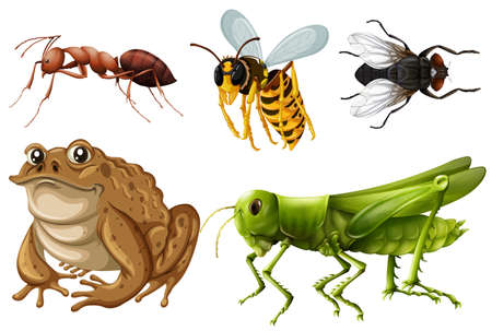bugs: Set of different kinds of insects illustration