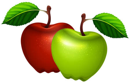 Fresh green and red apples illustration
