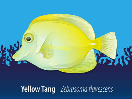 tang: Yellow Tang swimming in the ocean illustration