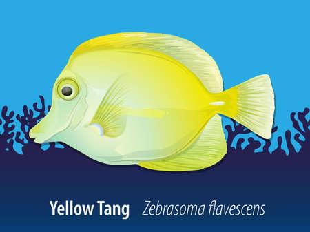 zebrasoma: Yellow Tang swimming in the ocean illustration