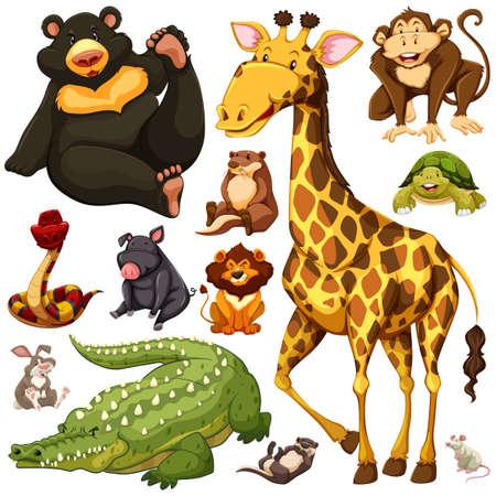 nutria caricatura: Los diferentes tipos de ilustraci�n de animales salvajes