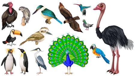 pigeon owl: Set of vareties of wild birds illustration