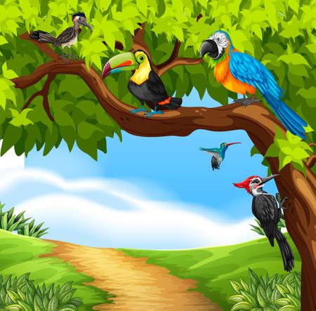 guacamaya caricatura: aves silvestres en la ilustración del árbol