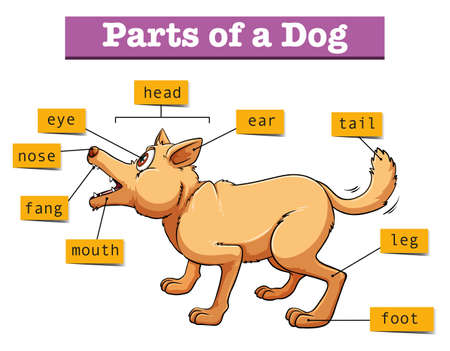 Different parts of domestic dog illustration