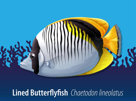 exotic fish: Lined butterflyfish swimming in the sea illustration
