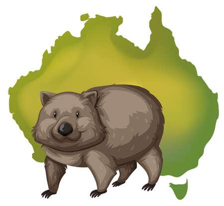 wombat: Wombat y Australia mapa ilustración