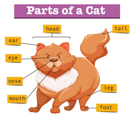 animal mouth: Diagram showing parts of cat illustration