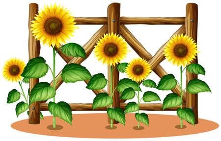Zonnebloemen en houten hek illustratie