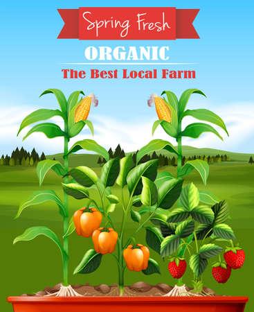 champ de mais: Les légumes frais dans l'illustration de la ferme