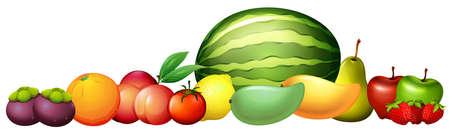 Many types of fresh fruits illustration