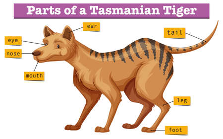 Diagram showing parts of tasmanian tiger illustration