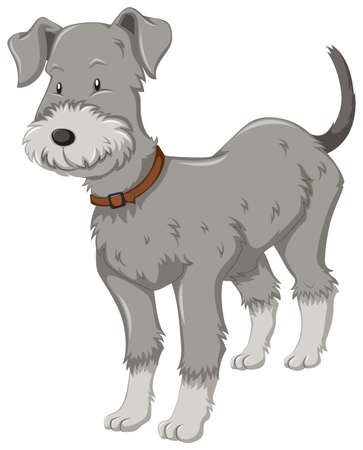 little dog: Little dog with gray fur illustration