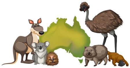 Wild animals in Australia illustration