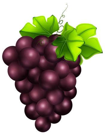 Fresh grapes on white background illustration Illustration