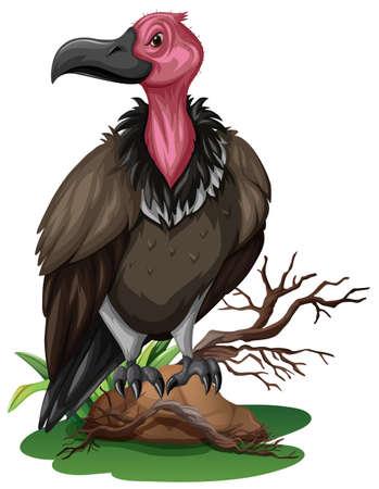 endangered: Wild vulture on the rock illustration