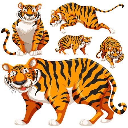 tigress: Set of wild tigers illustration