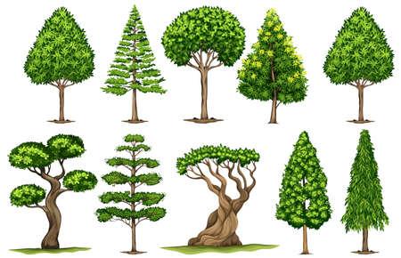 Différents types d'arbres illustration