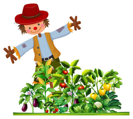 vegetable garden: Scarecrow and many types of vegetables in the garden illustration