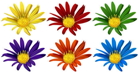 Flowers in six different colors illustration
