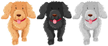 multiple image: Three poodle dog with happy face illustration