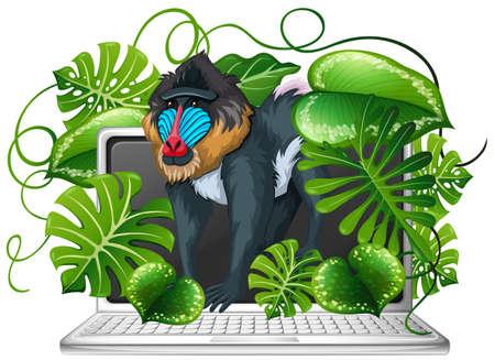 baboon: Baboon on computer screen illustration
