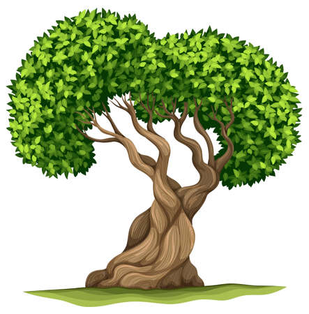 bonsai tree: Tree with green leaves illustration