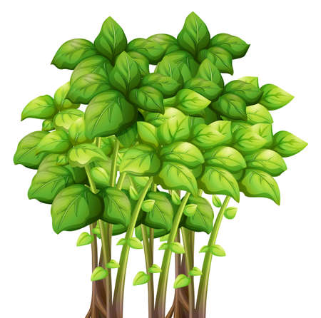 bunch: Bunch of green leaves  illustration