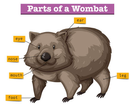 wombat: Diagrama que muestra partes de la ilustración wombat Vectores