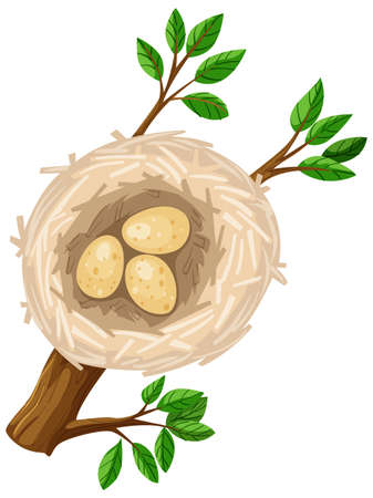 bird nest: Three eggs in bird nest illustration